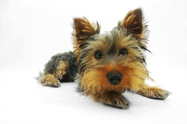 posłanie dla psa