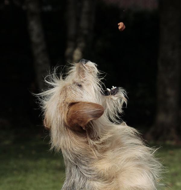 mokre karmy dla psów
