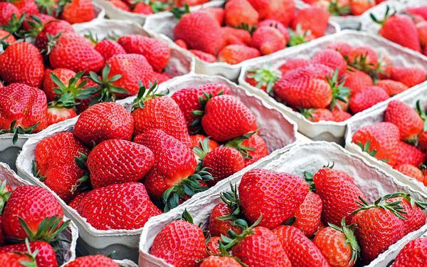 Kiedy warto wapnować truskawki?